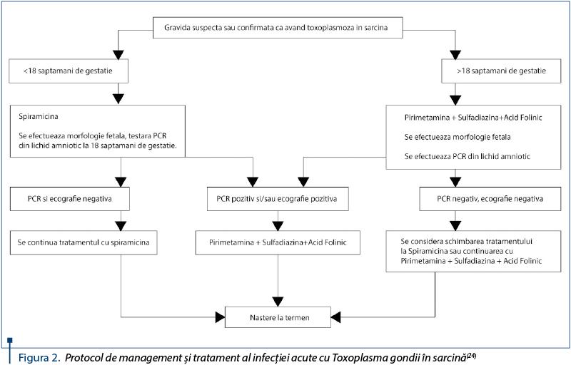 simptome toxoplasmoza in sarcina