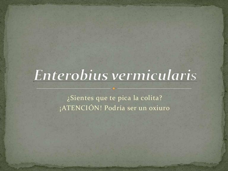 enterobius vermicularis hospedero)