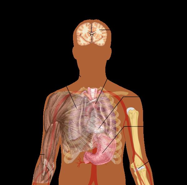 infecții cauzate de viruși și paraziți bacterieni hpv human cell line