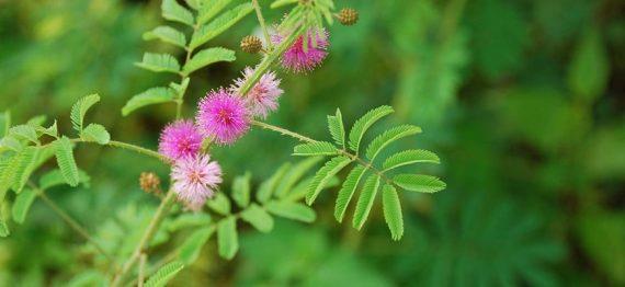 Dați exemple de paraziți ai plantelor