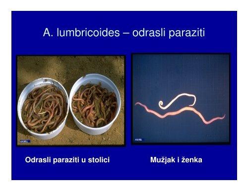 tablete parazite pentru bărbat)