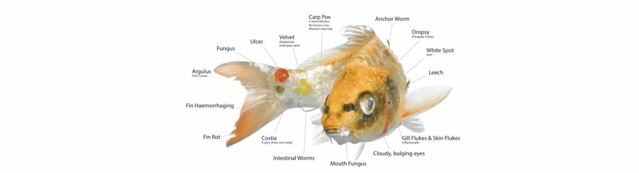 Anchor Worm & Fish Lice medicament contra paduchelui de crap 500 ml