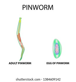 enterobiasis by pinworm)