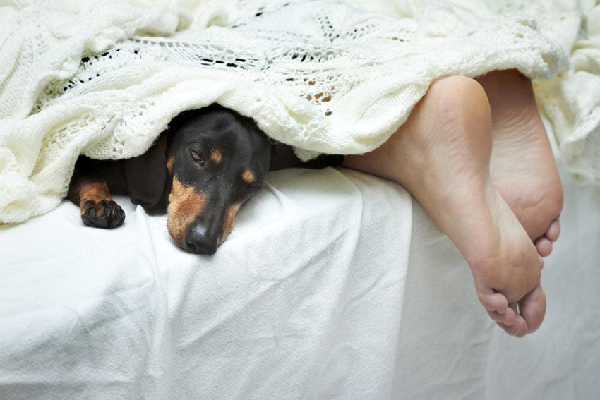 hond diarree s nachts)