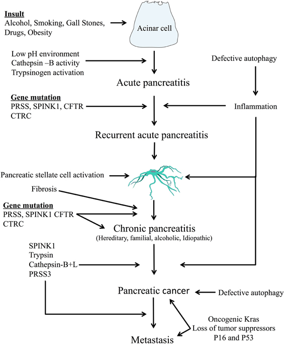 cancer pancreatic enzymes)