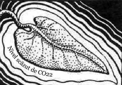 viermele încrucișat este un consumator femeie mai viermă rotundă