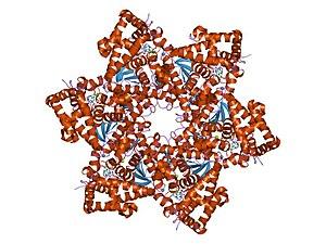 t humaan papillomavirus