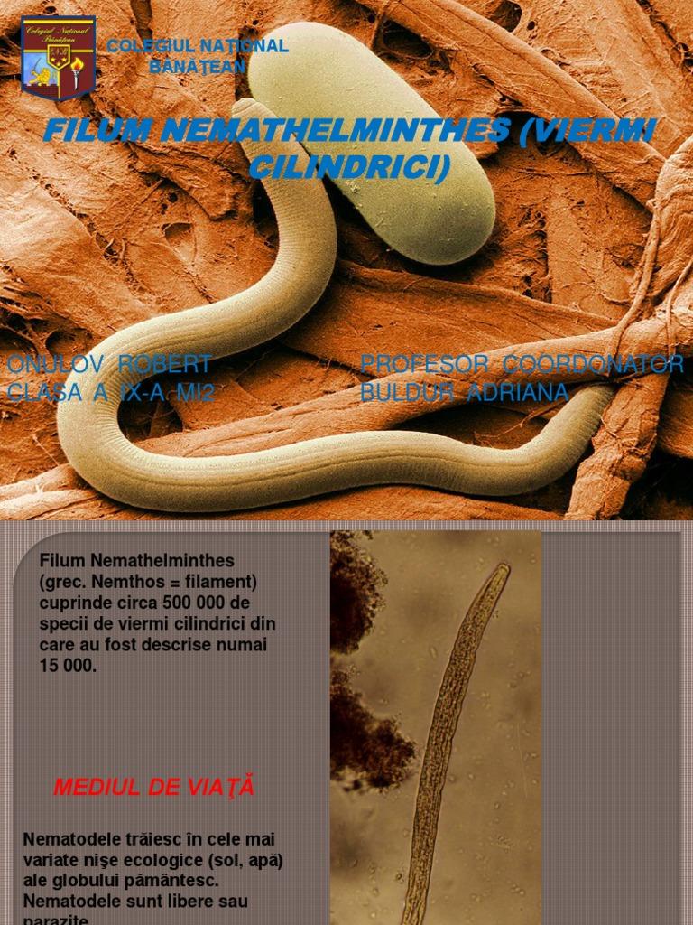 mai multe nemathelminthes din filum dalam)