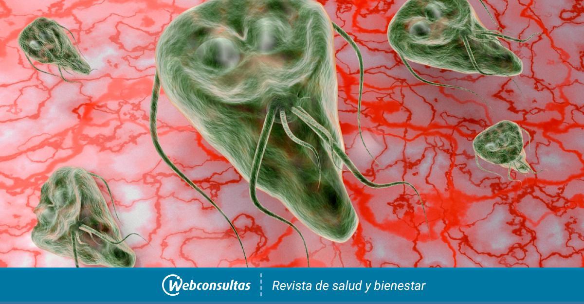 giardia și ameba