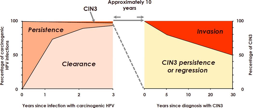 papillomavirus cin 3)