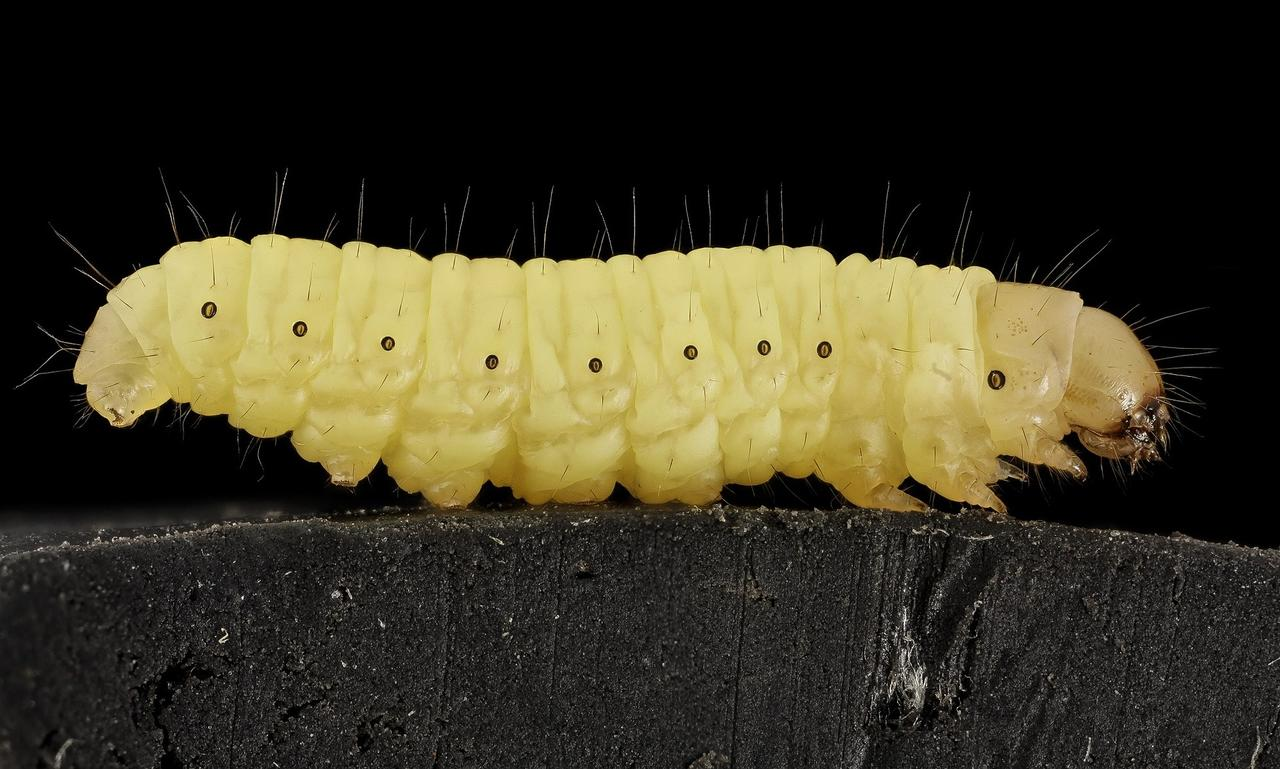 bacterie qui mange le plastique