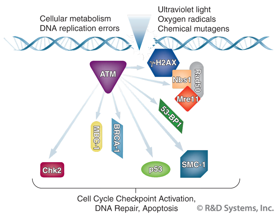cancer genetic instability