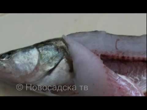 paraziti na ribama)