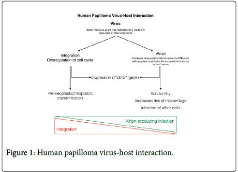 ricerca dna papilloma virus)