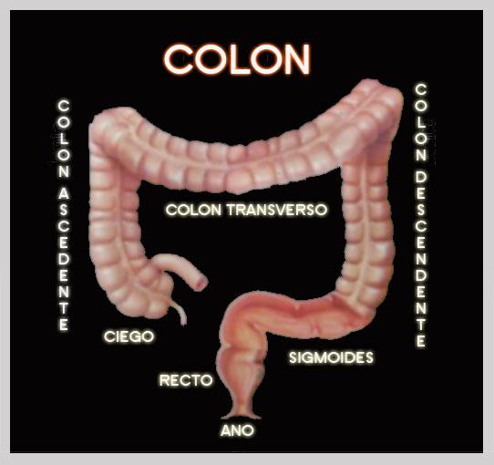 (PDF) Conductas en gastroenterologia | Soledad Del Castillo Gutiérrez - divastudio.ro