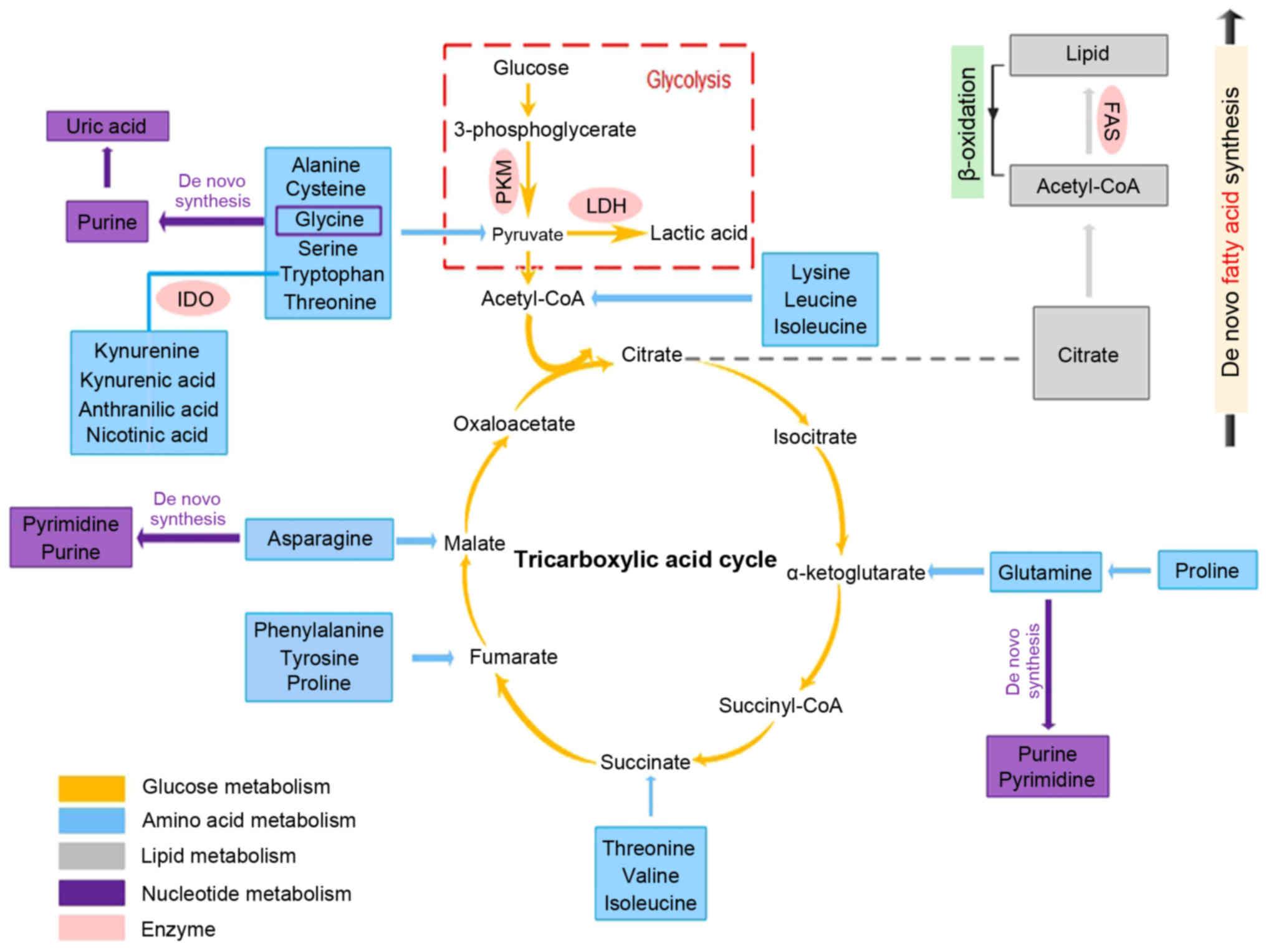 human papillomavirus infection types of warts