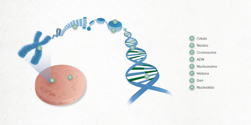 que es cancer genetico)