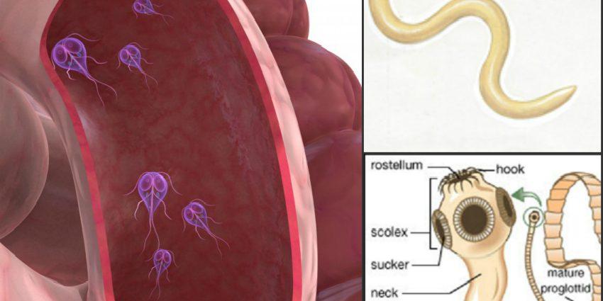 simptomele viermilor la copii și adulți