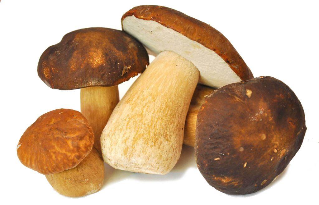 Ciuperci hribi porcini uscate 25g - SONNENTOR, pret RON