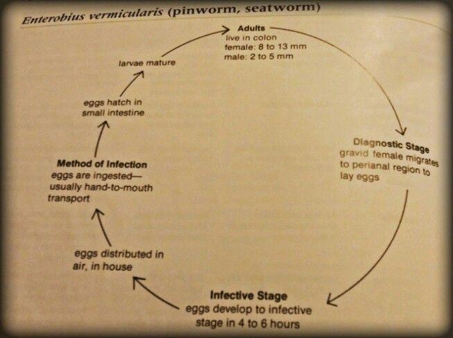 biohelminth pinworm sau geohelminth)
