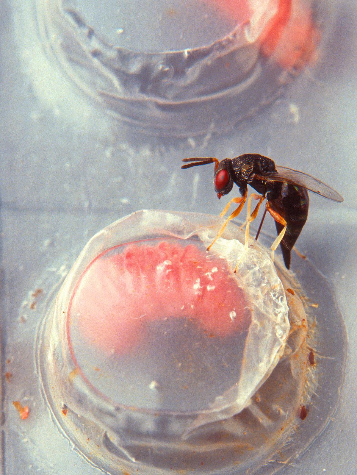 23 Exemple de parazitism la om și la animale   Thpanorama - Acum deveniți mai buni