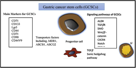 Gastric cancer tumor marker, Caracteristicile Principale Ale Unui Marker Tumoral