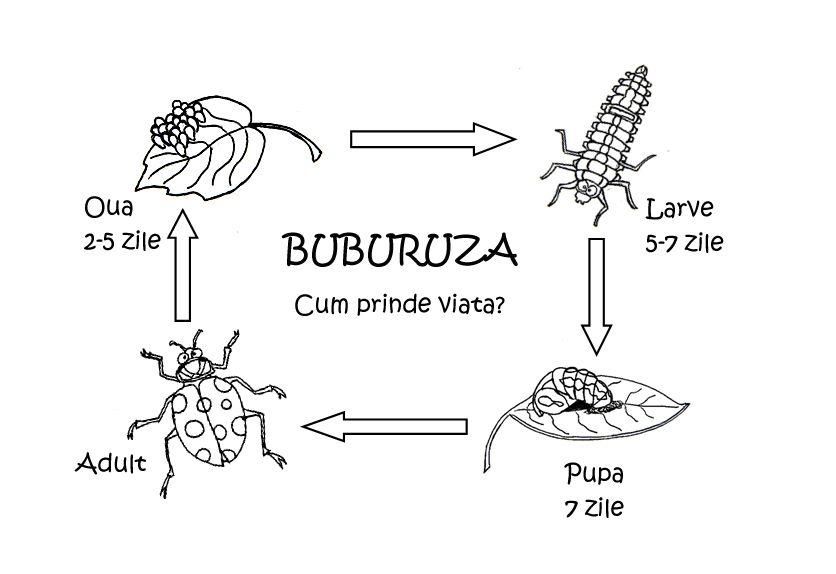 erupții cutanate papiloma