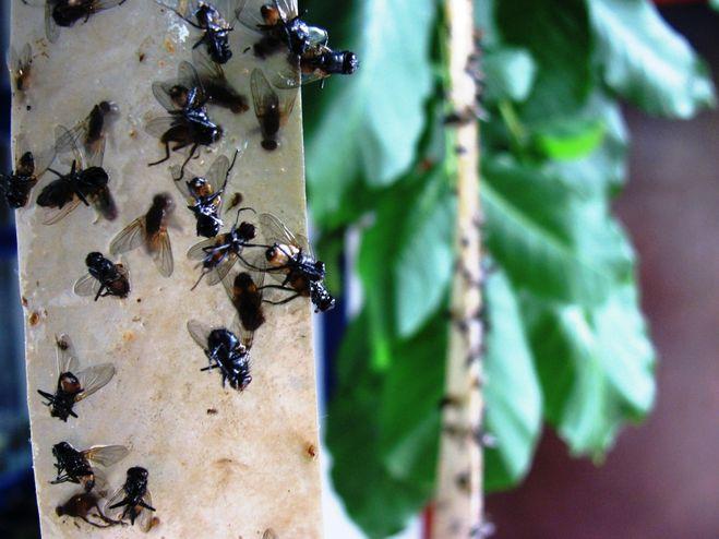 metoda domestică împotriva insectelor