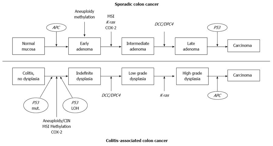 Cancer colon pathophysiology
