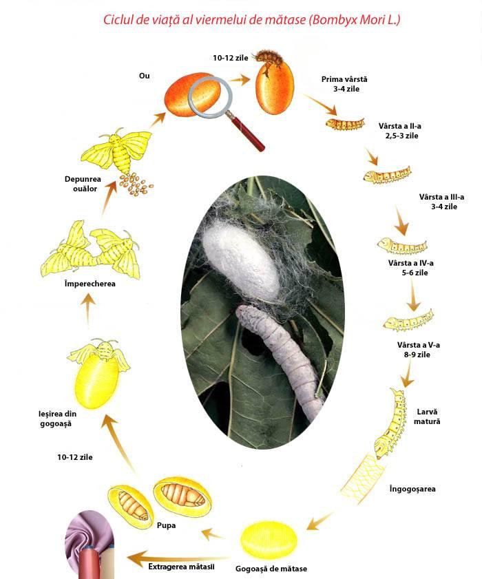 Semne de paraziți specifici viermilor, Cel mai bun leac pentru viermi pentru un copil