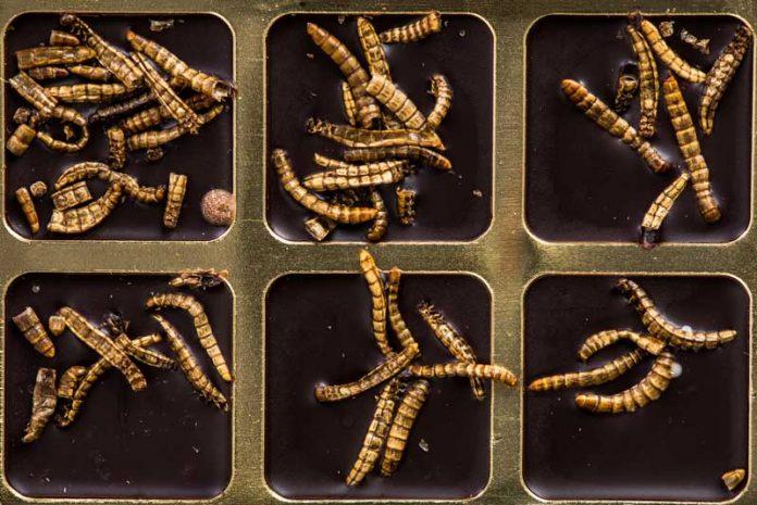 viermi de mărime în corpul uman)
