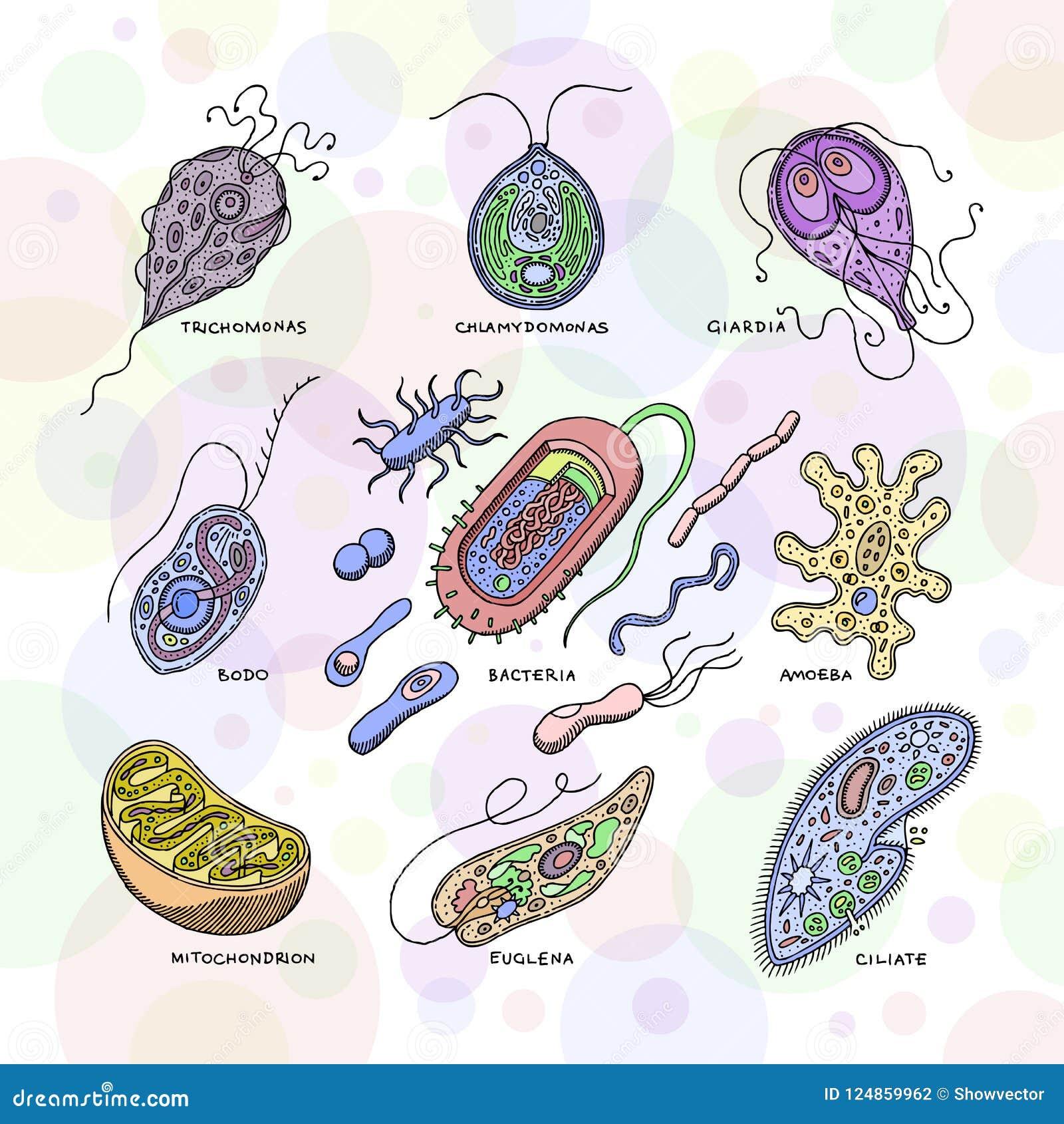 virusul giardiei sau bacteriile)