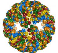 papillomavirus h16)