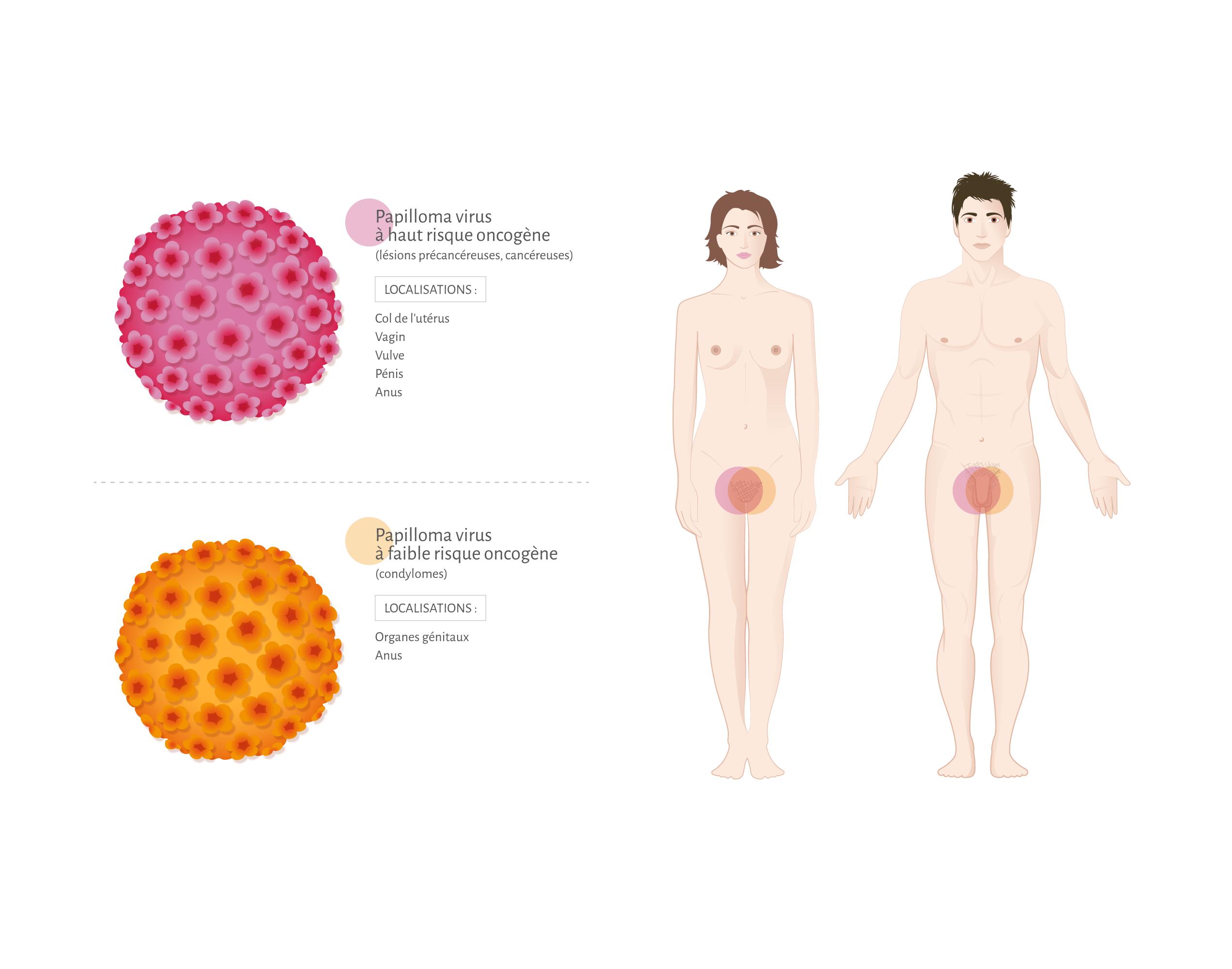 paraziți protozoali de l homme