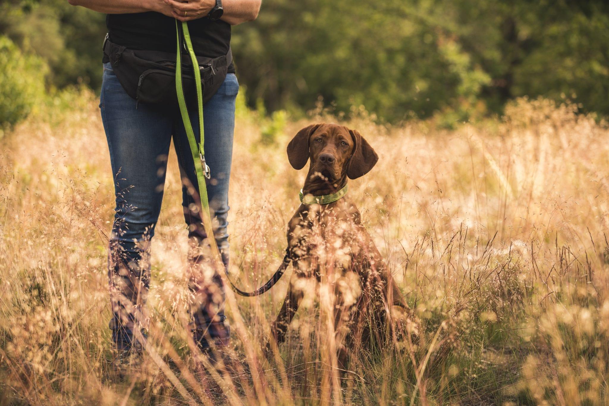 giardia bij honden behandelen