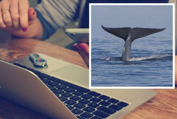 balena în cod albastru