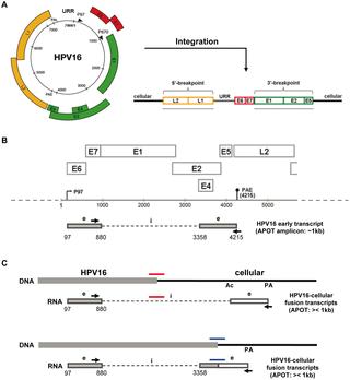 Human papillomavirus infection penyebab