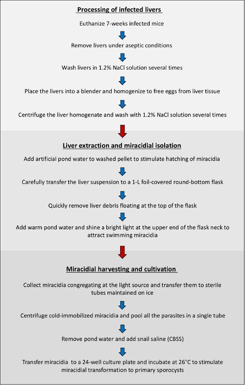 papilloma cancer throat măsuri preventive pentru helmintiază