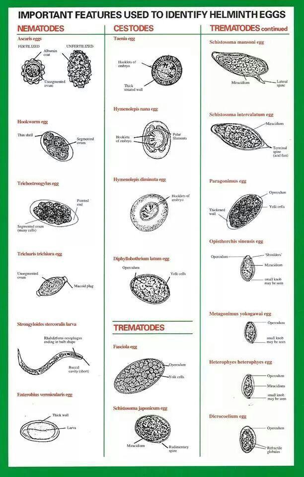 helminth eggs