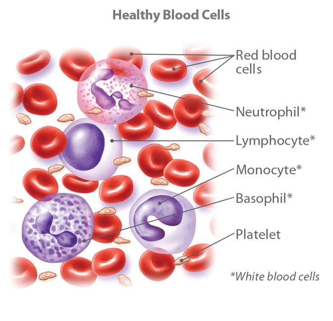 blood cancer genetic link)
