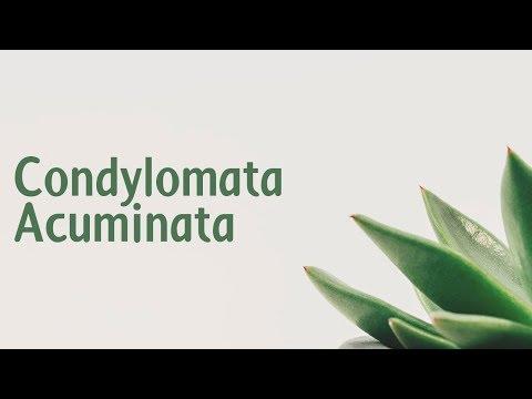 condyloma acuminatum giganteum