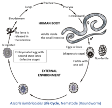 helminth meaning science