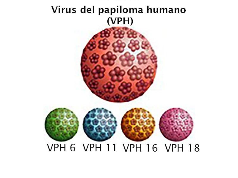 Que virus es el papiloma humano,