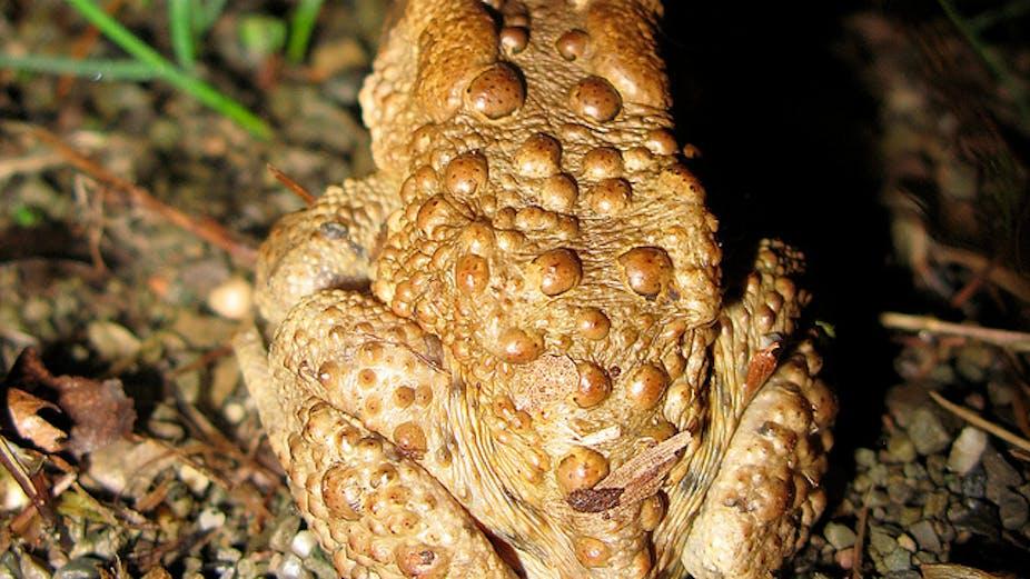 Wart virus on hands, Fișier:Papilloma Virus (HPV) divastudio.ro - Wikipedia