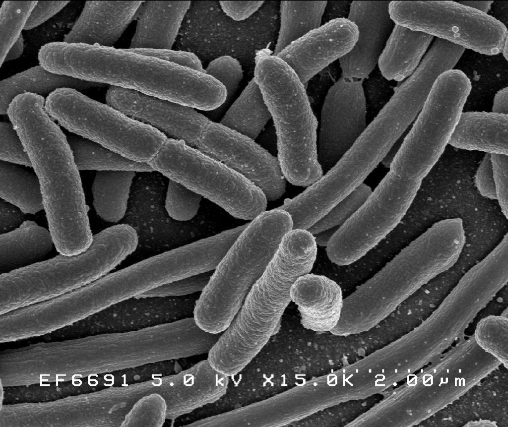 Bacterii clasa 6