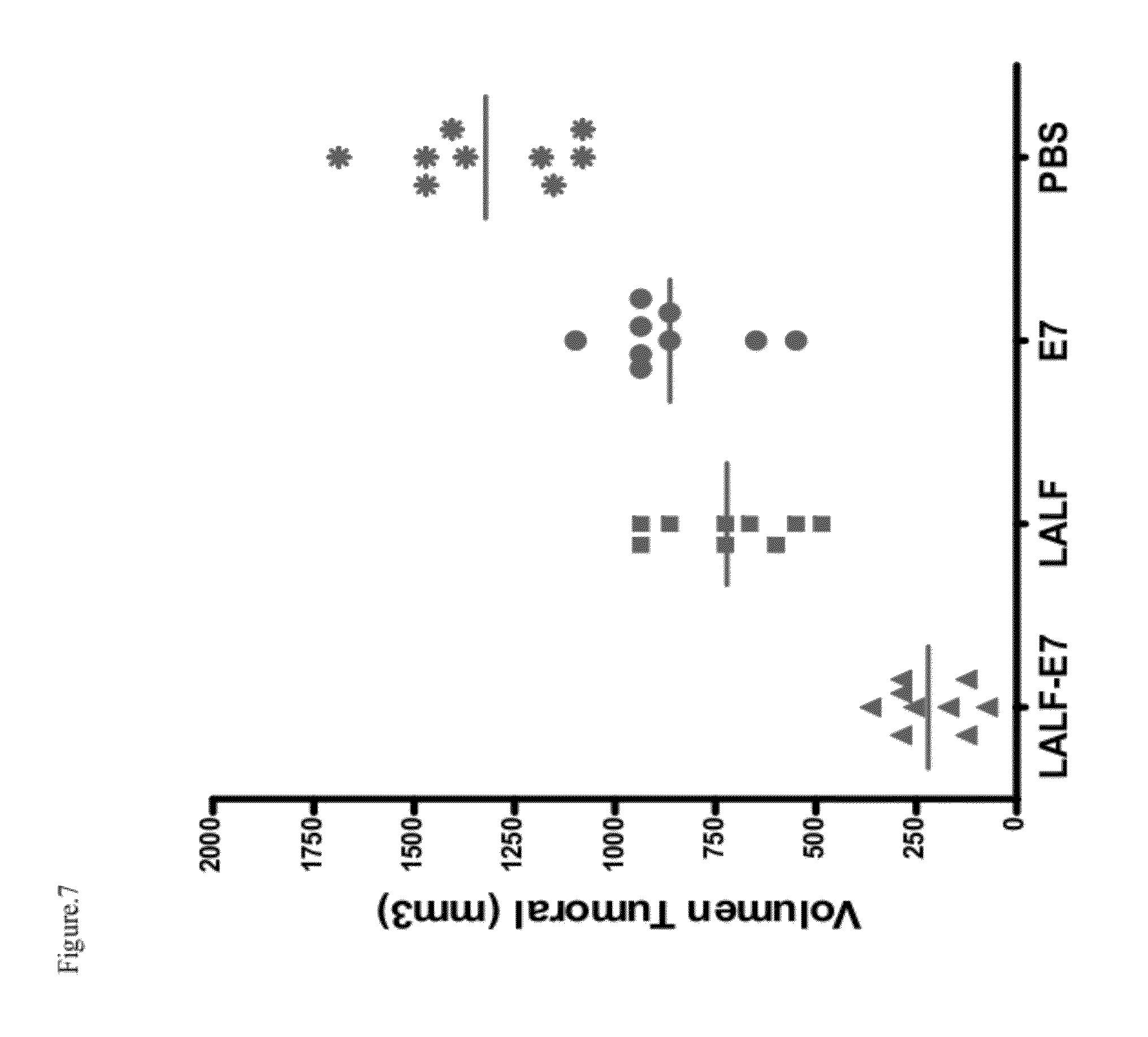 papillomaviridae replicacion)