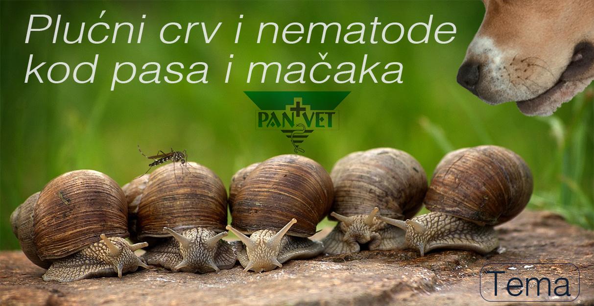 plucni paraziti kod macaka)