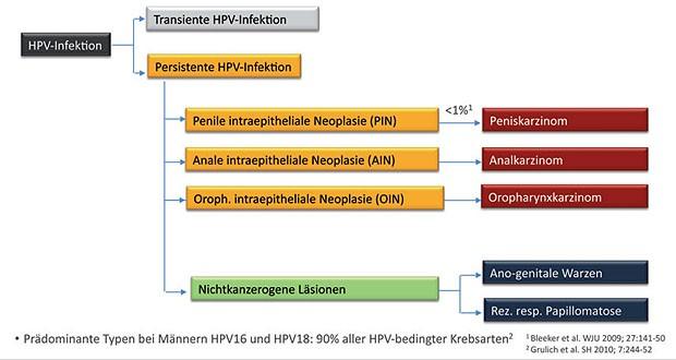 hpv impfung manner kosten)