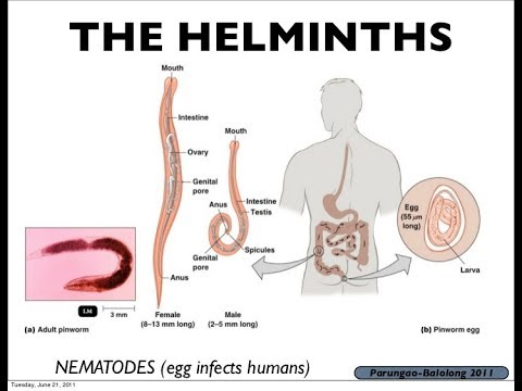what does helminth mean in medical terms