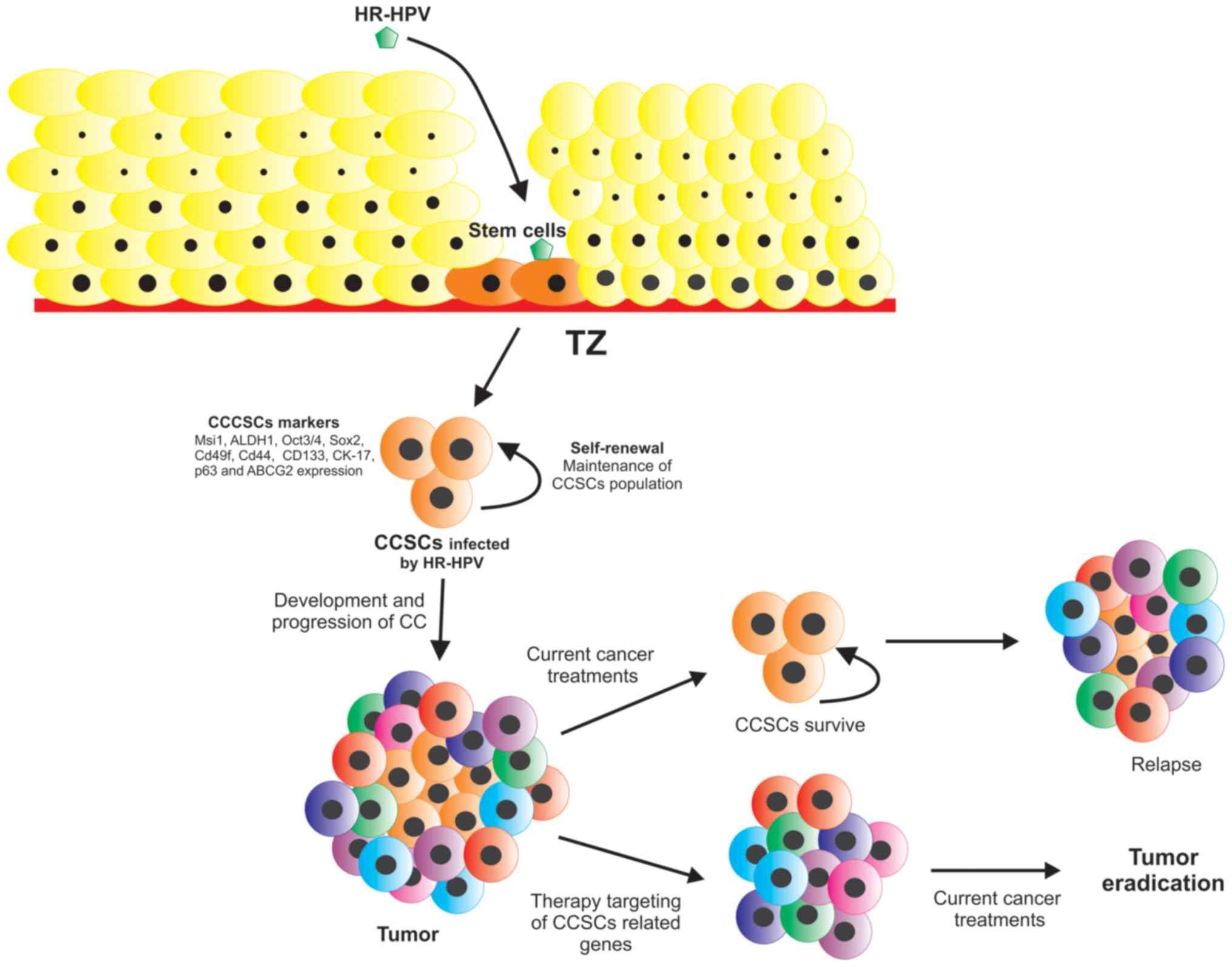 Cervical cancer genetic.